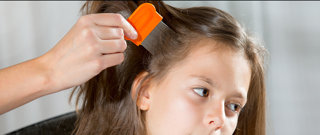 treatment resistant lice