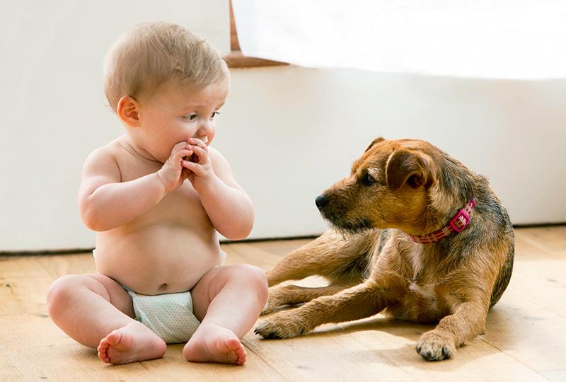 child ate dog poo