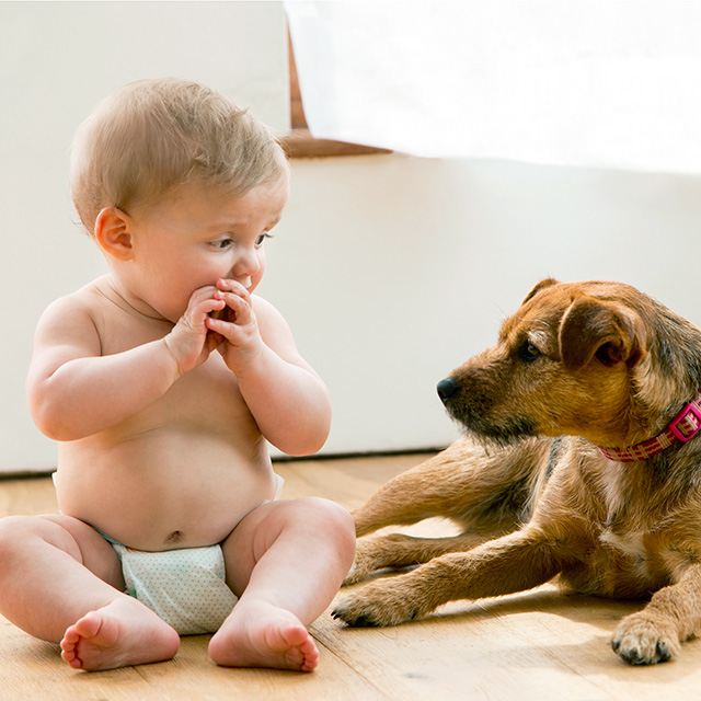 my child ate dog poop